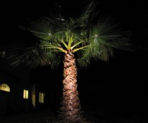 LED Palm Tree Spot Lighting